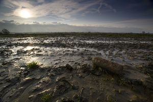 An unexploded shell lies amidst the mud of Passchendaele. - Ypres